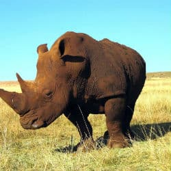 WWF Worried By Rhino Poaching