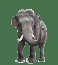 Elephants are under threat