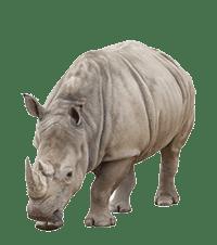 Rhino Adoption