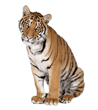 Become a Tiger Protector