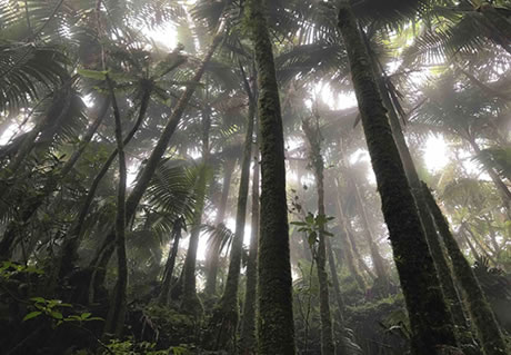 Help WWF Protect the Rainforest