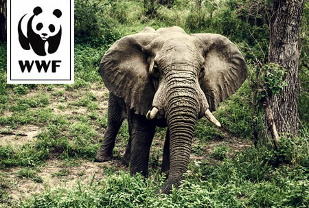 WWF Membership
