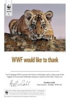 Adopt a Tiger Certificate