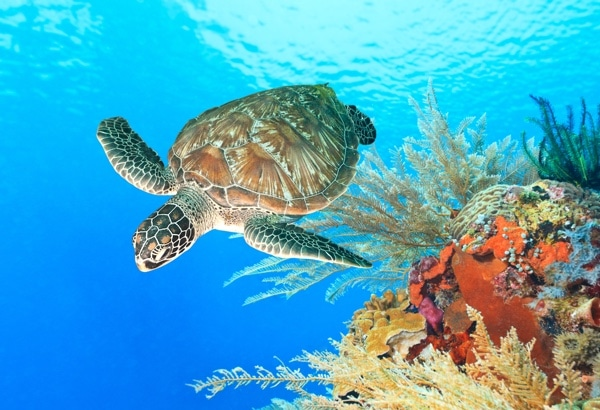 WWF Conservation