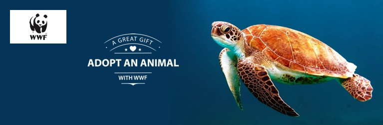 Adopt a Turtle