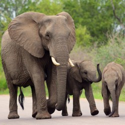 Rare Elephant Twins Born At South African Game Reserve