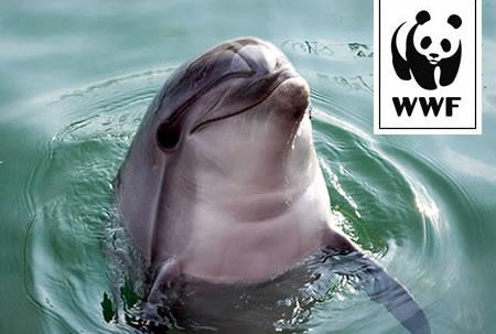 WWF Adopt a Dolphin
