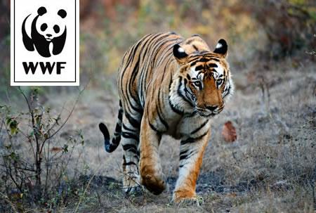 WWF Tiger Protector